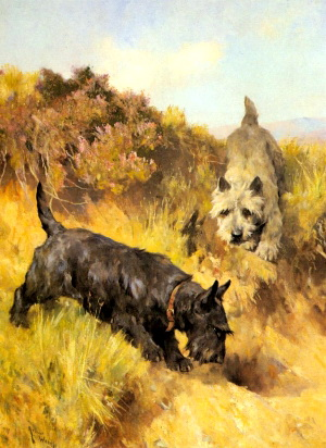 two_scotties_in_a_landscape-large_thumb_medium300_412